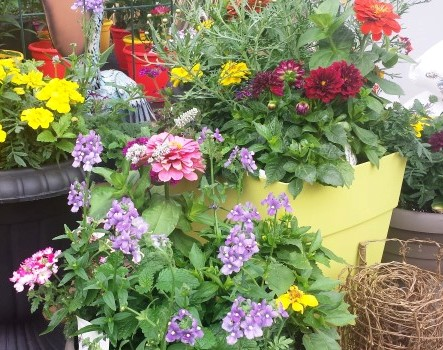 Plant arrangement in container at Van Luyk Greenhouses London ON