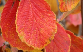 Fall Colour - Thumbnail