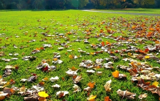 fall-lawn-fertilizer