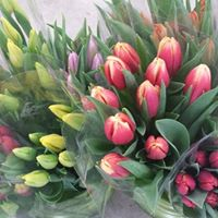 Floral and Gift Centre at Van Luyk Greenhouse London ON