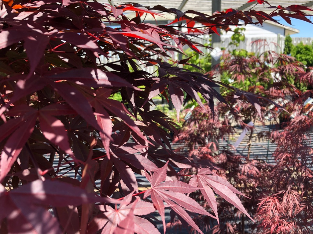 Trees and Shrubs-2019 season