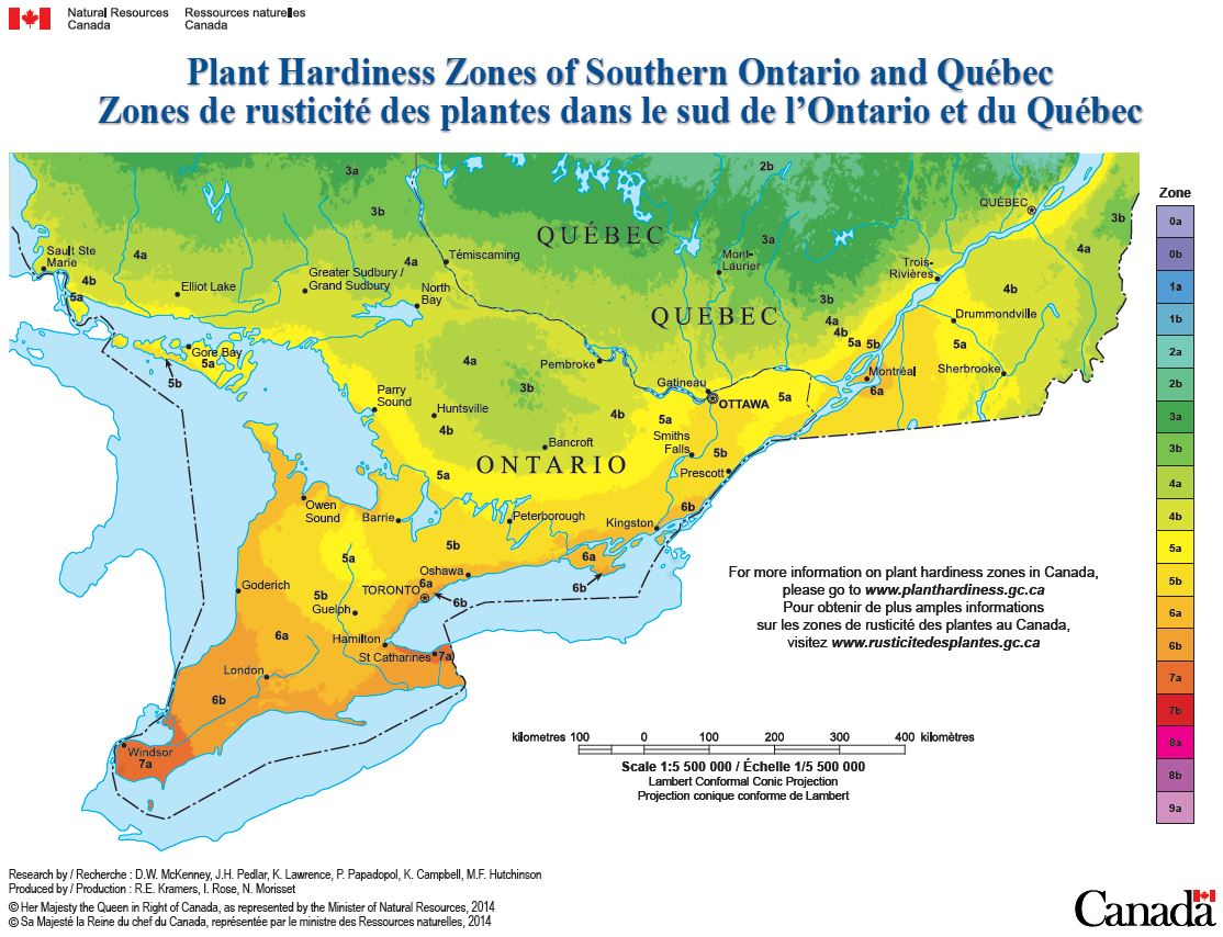 hardiness myths van luyk greenhouses and garden centre